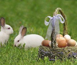 Chasse aux oeufs de Pâques de La Croisée – C'était amusant!